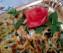 nidi di lasagne spinaci e ricotta (5)
