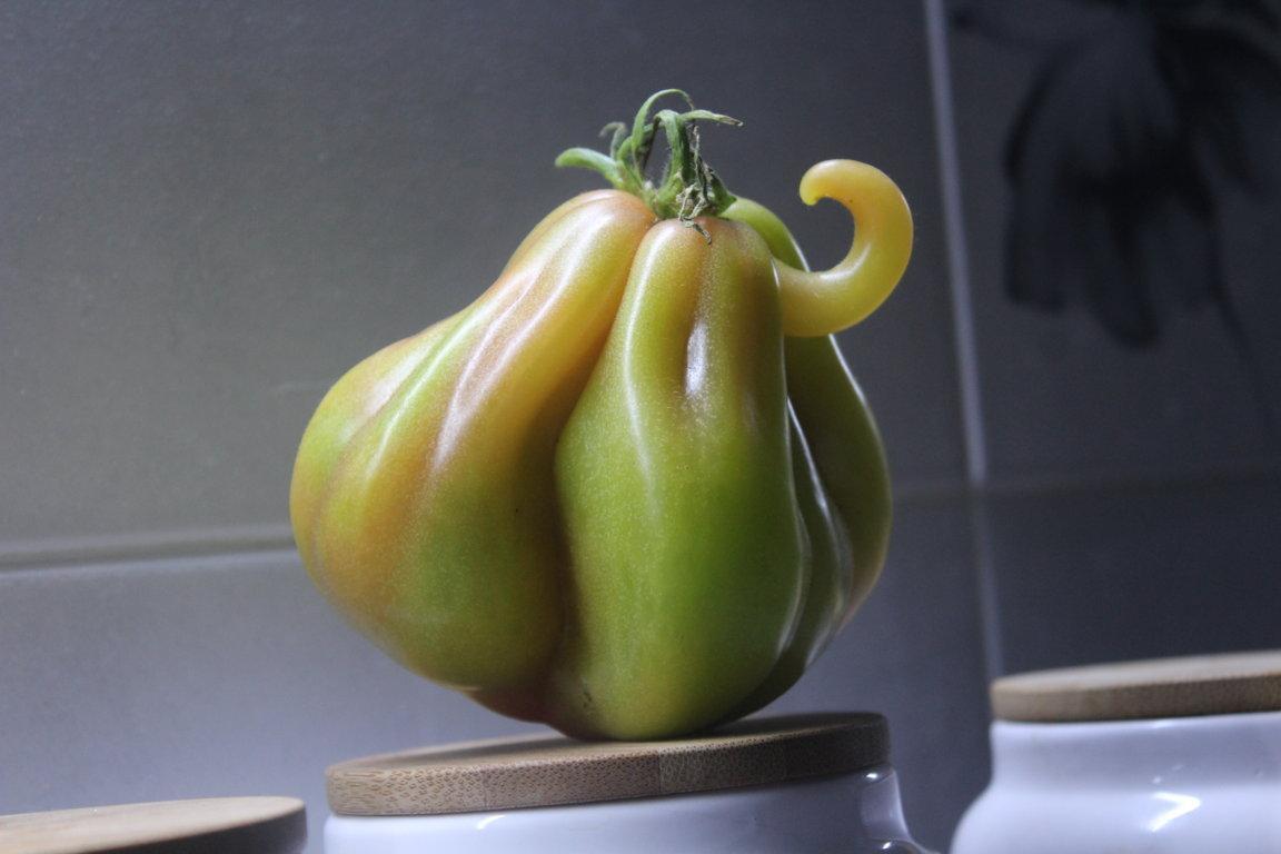 Pomodoro verde, speranza di un amore!