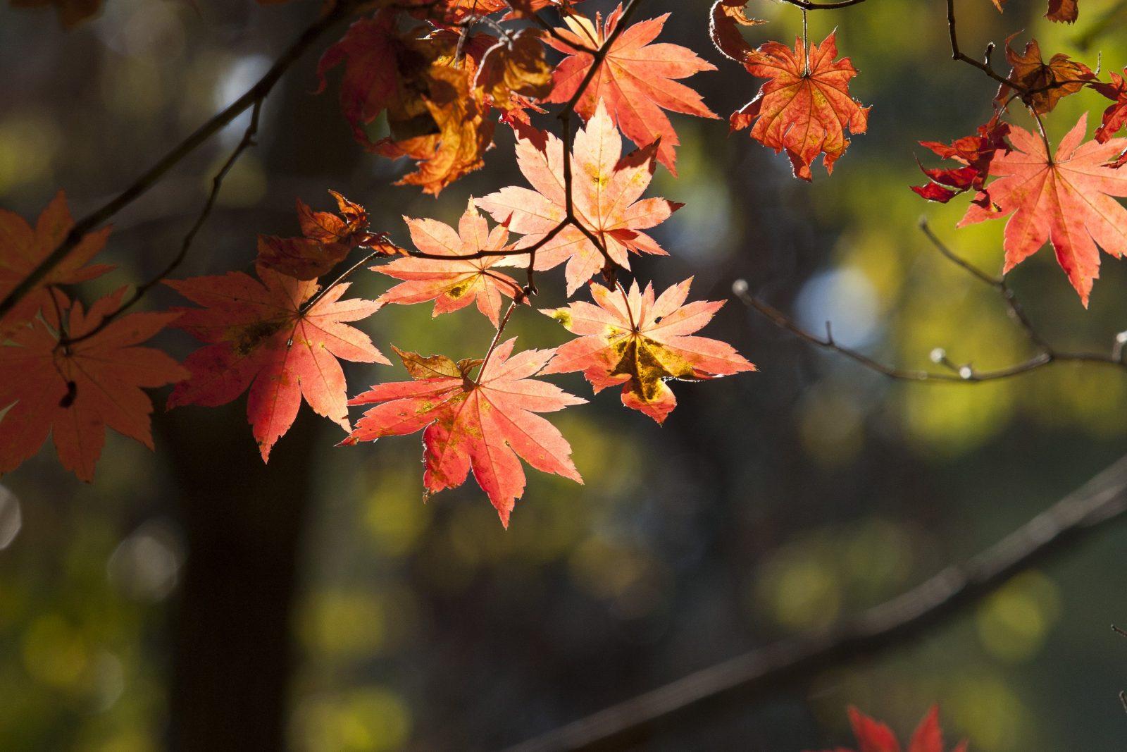 Le migliori ricette d'autunno